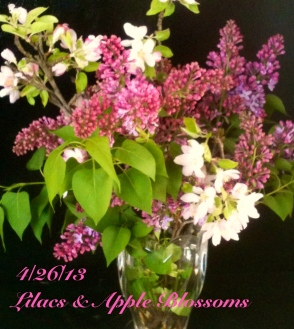 Apple blossoms and lilacs