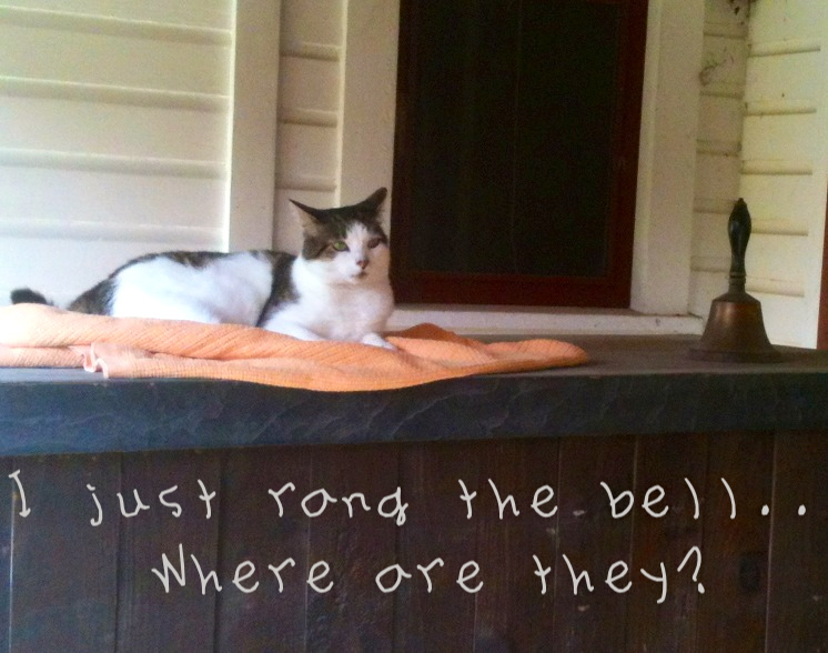 Cat and bell