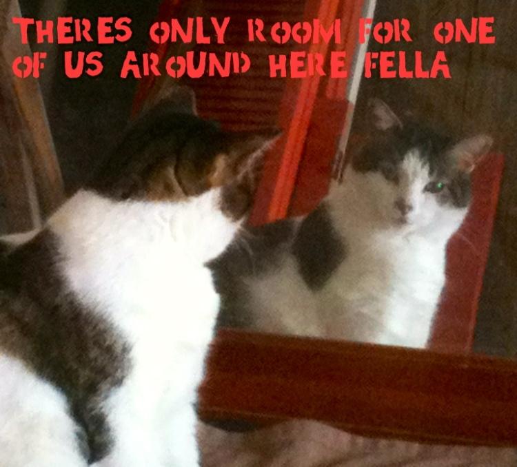 cat looking in mirror