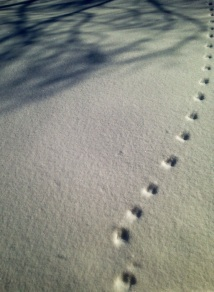 deer tracks in snow
