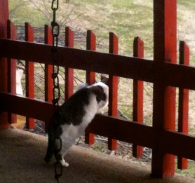 Kitty looking over back porch
