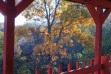 Back porch view autumn