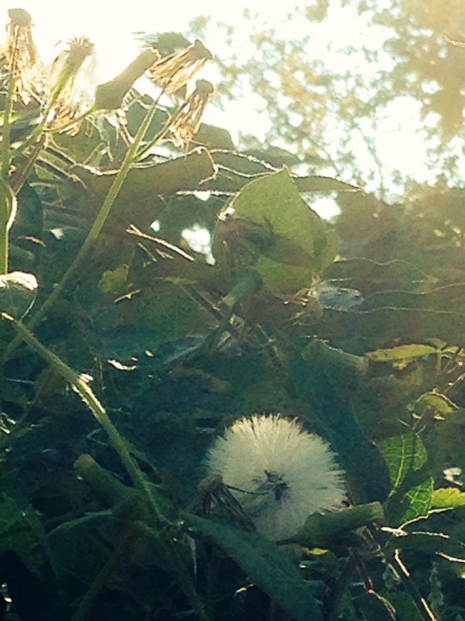 ordinary flower