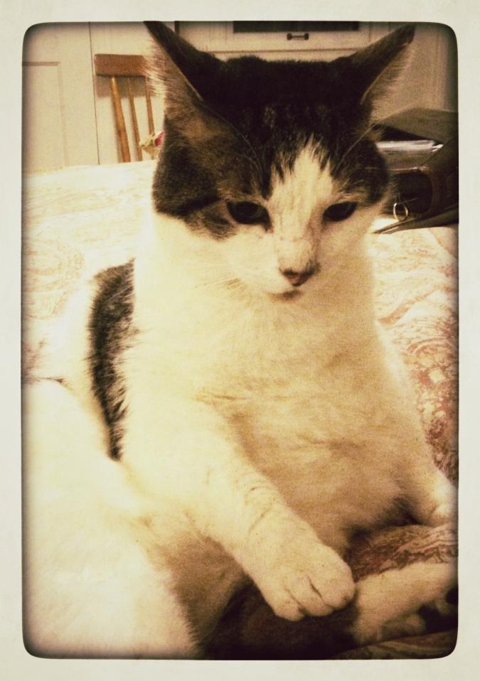 Henry the model cat