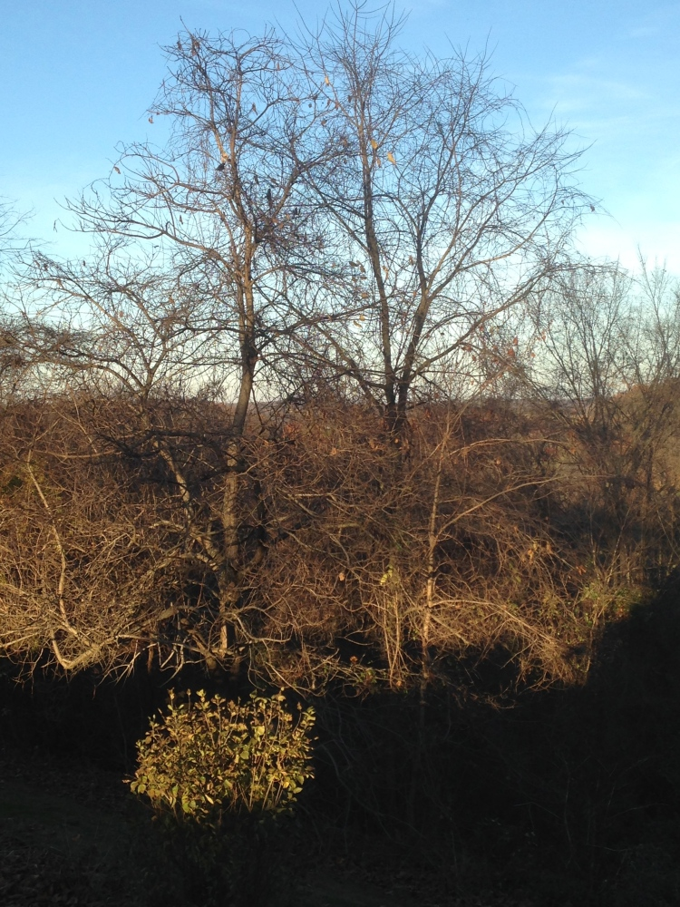 shadows on bare trees