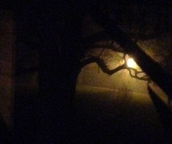 fog and street light
