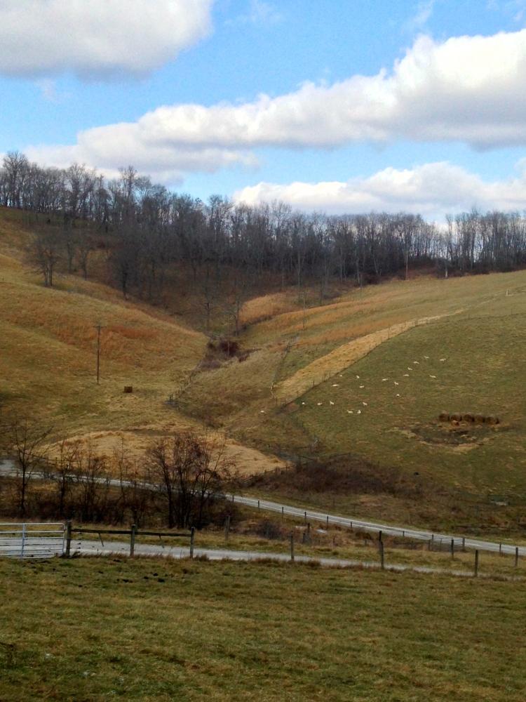 Sheep farm on Ruff Creek Hill