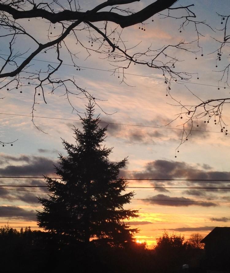 sunset through the spruce