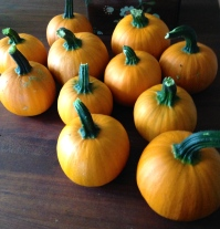 mini-pumpkins