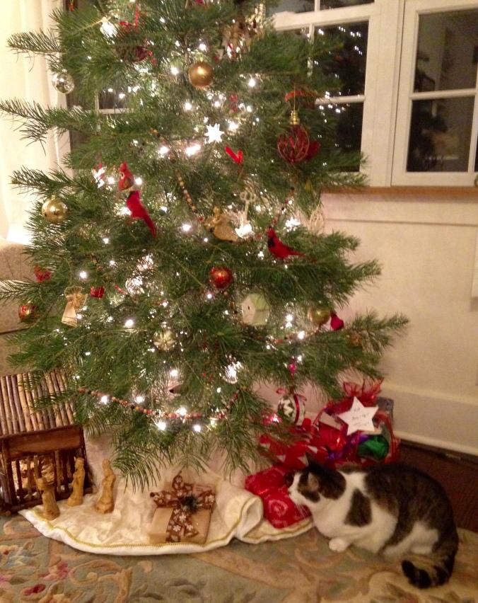 the cat's tree
