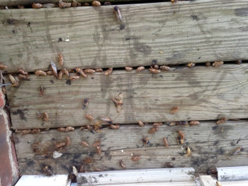 porch covered with periodic cicadas