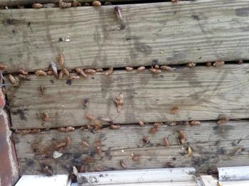 porch covered with periodic cicadas