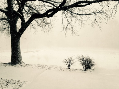 snowstorm and tree
