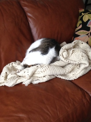 cat napping on blanket