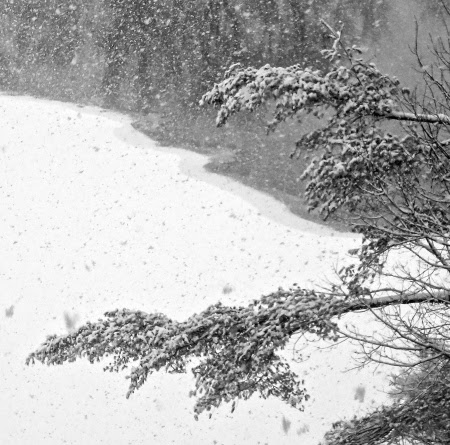 Winter Abstraction photographed by Catherine Arcolio. Used with permission.