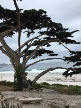 Carmel by the Sea city beach